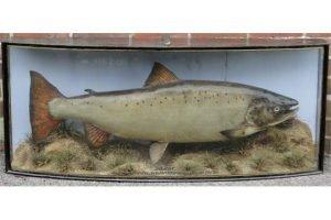 taxidermic salmon